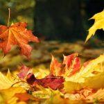 Soffio d'autunno